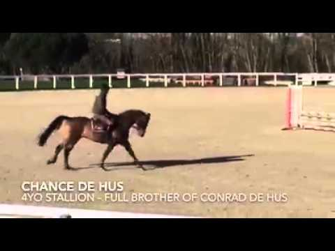 change_video_youtube2('q3ybM8Yq3-4','propre frère de CONRAD DE HUS');