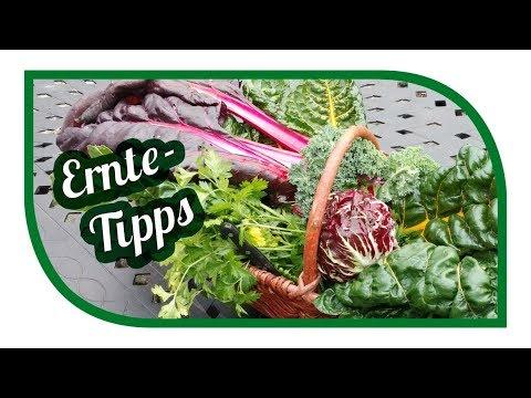 Ernte Tipps November ☔️ Unser Garten im November