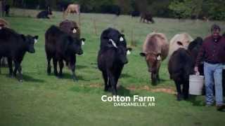 Tom Cotton Ad: Listened