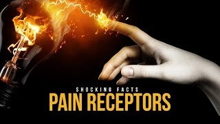 Pain Receptors – Shocking Facts
