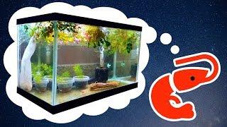 HOW TO: Easy Cherry Shrimp Tank for Breeding