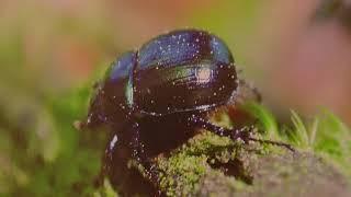 Фотовиставку «Біорізноманіття пралісів Горган» презентували у Івано-Франківську (відеофакт)
