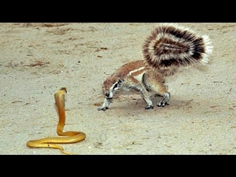 11 WEIRD Animal Attacks