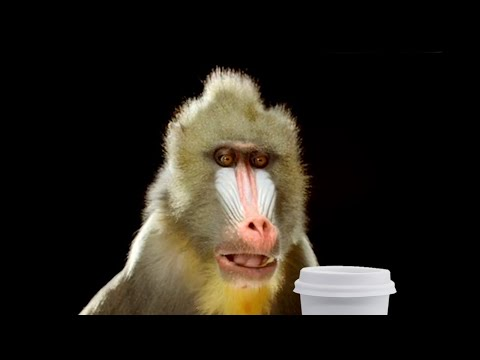 """Monkey Business"" - Sketch Comedy (Car Coffee)"