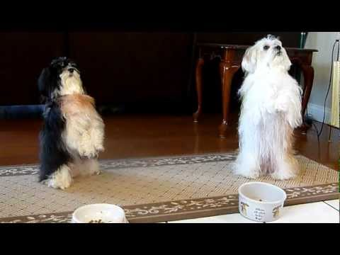 My dogs jaisan and jia prays before meal