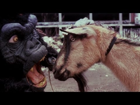 Black Dahlia Murder - Goat Of Departure
