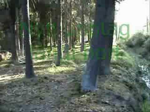 Qs Aster driver hare (hela filmen)