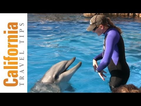 Dolphin Trainer Video