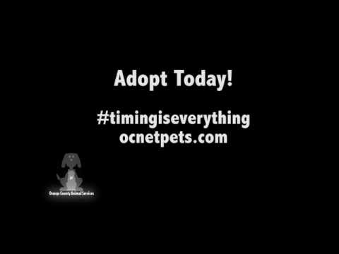 Animal Services   Time To Adopt 15 Seconds