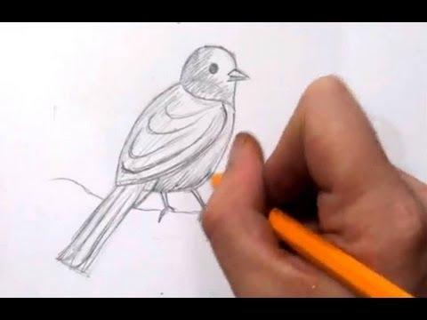 Как рисуют птичек видео
