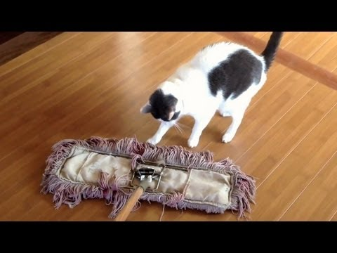 Cats VS Broom of Doom