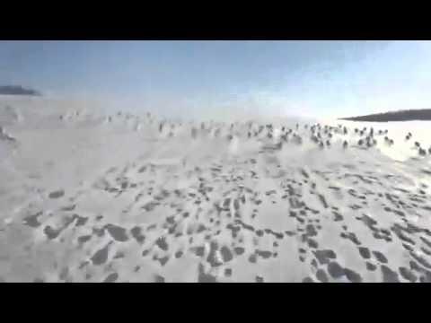 Зайцы удирают от снегохода