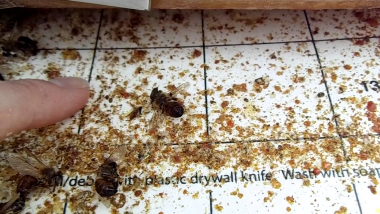 Urban Beekeeping 27 Varroa Mite Screened Bottom Board