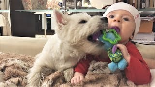 Приколы с животными 2017 Самые милые собаки и дети 犬 Ultimate FUNNY DOG Compilation Cute Pets 2017