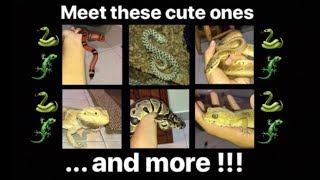 MEET all my PET REPTILES !!!