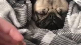 Hài Hước TV: Cả thế giới thu bé lại chỉ bằng một con chó ^^