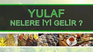 YULAF Nelere yi Gelir
