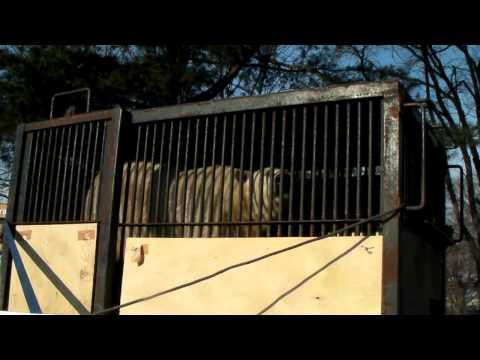 おびひろ動物園 ホッキョクグマのキロル 浜松へ旅立ちの朝