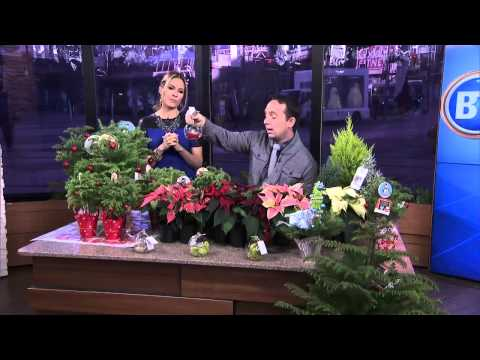 Frankie Flowers: Holiday plants