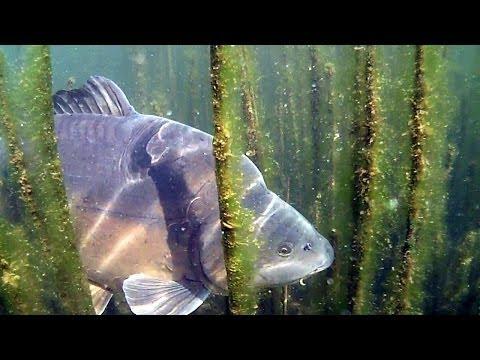 рыбалка под водой купить