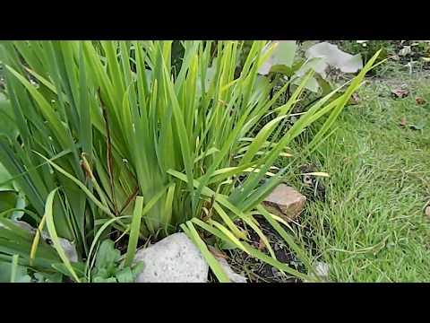 2 варианта газона – простого, быстрого и с малым уходом
