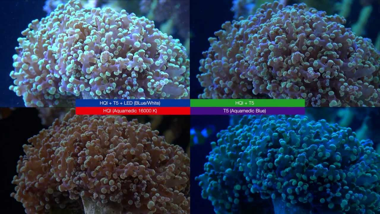 Led Vs T5 Vs Hqi Light Reef Tank Story Youtube