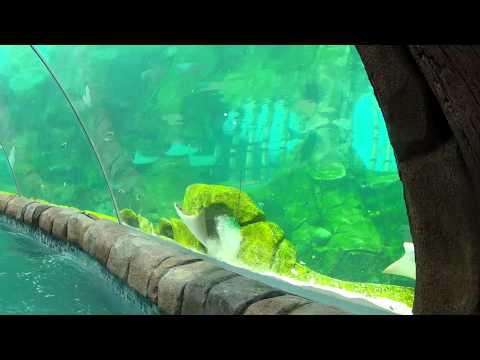 Stingray Falls at Aquatica San Antonio - HD - Full ride experience