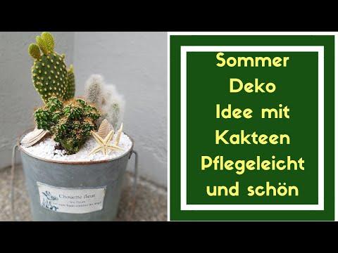 Sommer Dekoration Zum Selber Machen - Kakteen In Blechtopf Einpflanzen - Der Blumenmann Zeigt's Dir