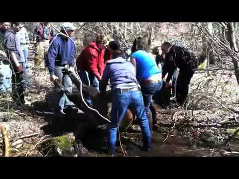 Raw Video: Horse Rescue