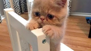 IMPOSSIBLE NOT TO LAUGH - Hilarious ANIMAL compilation