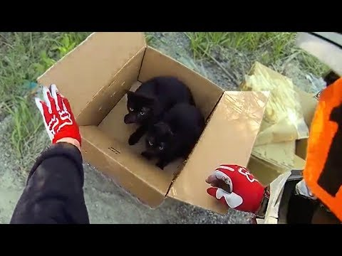 BIKER FINDS KITTENS! Random Acts of Kindness 2017 - Bikers Are Awesome - [Ep.#36]