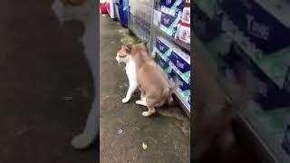 Doggy loves Kitty