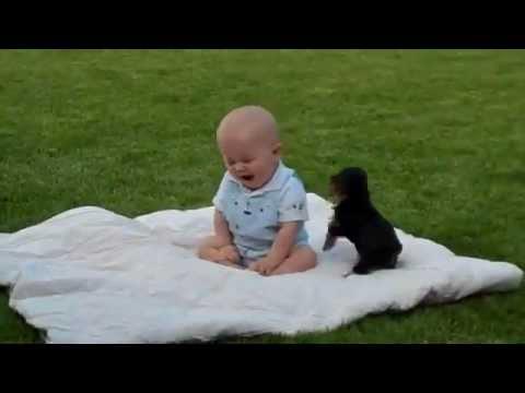 Pas napao dete !!!