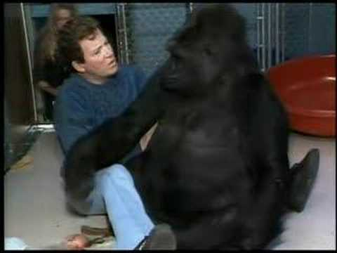 When Shatner Met Koko