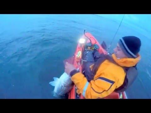 Jamaica Bay Kayak Fishing live bunker