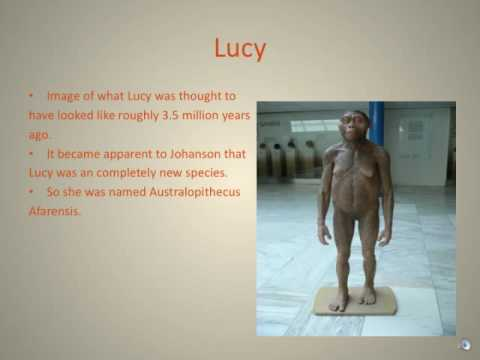 Lucy: The Discovery of a New Species