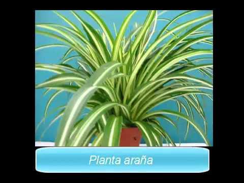 Plantas de interior 6 plantas para purificar el aire for Plantas ornamentales de interior