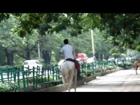 Horse Rider Riding horse in Our kolkata
