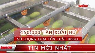 Tổn thất 150.000 tấn xoài mỗi năm ở ĐBSCL