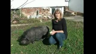 Criminal Profiler Pat Brown's Pet Pig Gwendolyn on NBC