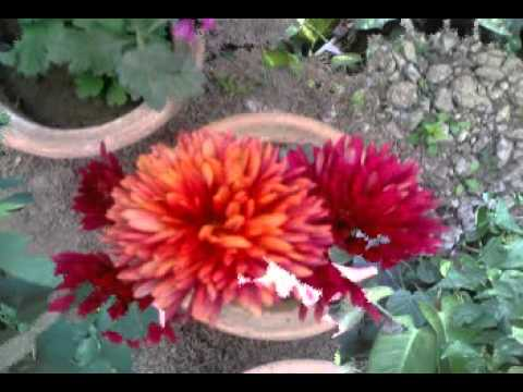 Manipuri Song-punsisina Ahanba Mangfaonarakpa Matamda-mp4 audio video