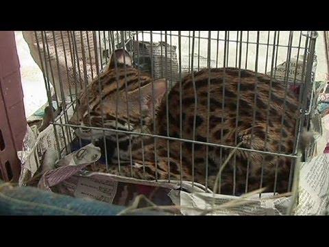 В окрестностях Бангкока найден секретный зверинец