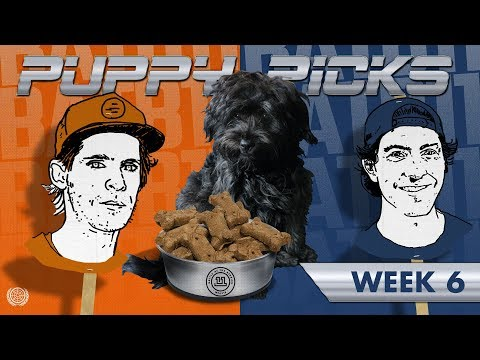 BATB 11   Puppy Picks: Week 6