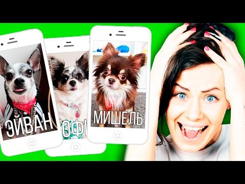 ЕСЛИ БЫ СОБАКА БЫЛА SIRI ! Все мои собаки в роли Siri