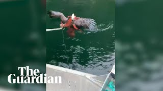 Octopus captures eagle that tried to attack it
