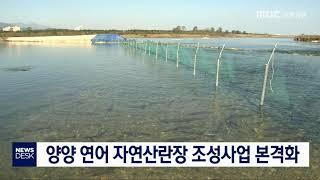 양양 연어 자연산란장 조성사업 본격화
