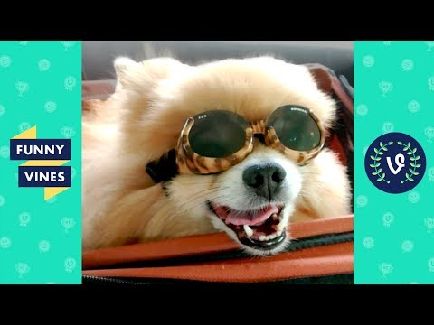 TRY NOT TO LAUGH - Funny Dogs Compilation | Cute and Adorable Puppy Videos | Funny Vines July 2018