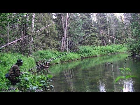 Рыбалка на таёжной речке #178