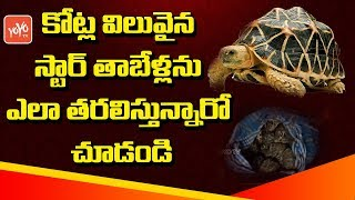 Star Tortoise Smuggling Racket, Seized At Vijayawada Railway Station | AP NEWS