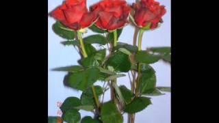 Piotr Rubik - Kropelka rosy, kropla krwi